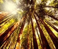 Une journée au milieu des Sequoias Géants