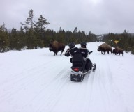 Wyoming, l'état sauvage