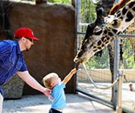 Une journée au Zoo de San Diego