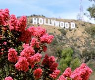 Ça brille pour tout le monde à Hollywood