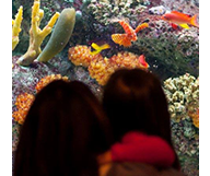 Le John Shedd Aquarium de Chicago