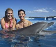 Encore plus près de Flipper au Dolphin Conservation Center de St Augustine