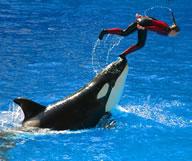 SeaWorld Orlando : Incontournable