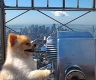 Avoir un chien à Manhattan… pas si simple