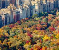 Quoi faire cet automne à New York ?