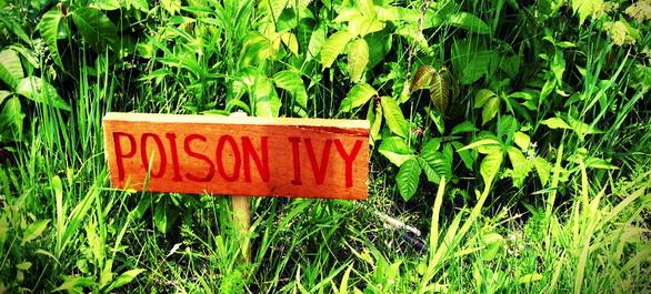 Le Poison Ivy en Georgie