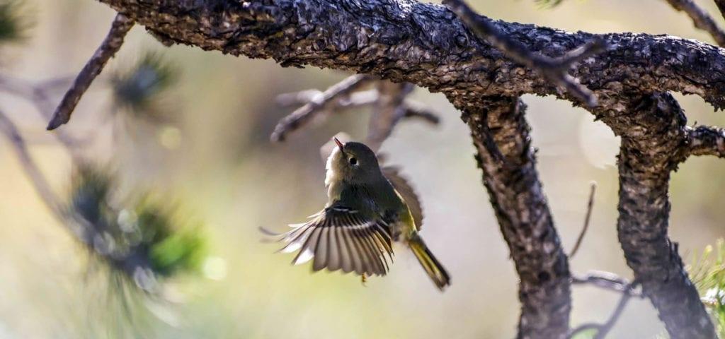 big-bend-national-park-texas-desert-montagnes-canyons-oiseaux2