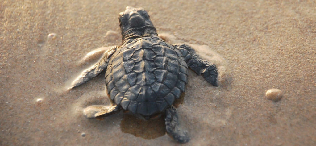 visiter-south-padre-island-vacances-peche-plage-tortues-01