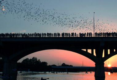 migration-chauves-souris-austin-diapo-une