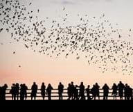 Les chauves-souris du Texas
