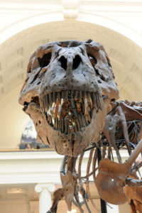 Tyrannosaurus Rex Sue at Field Museum in Chicago