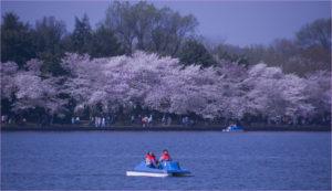 paddle-tidal-basin-2020