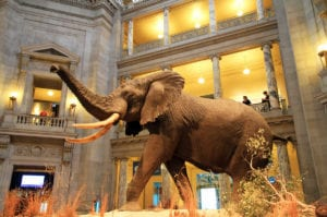 incontournables-monument-historique-etats-unis-d-c-national-museum-of-natural-history