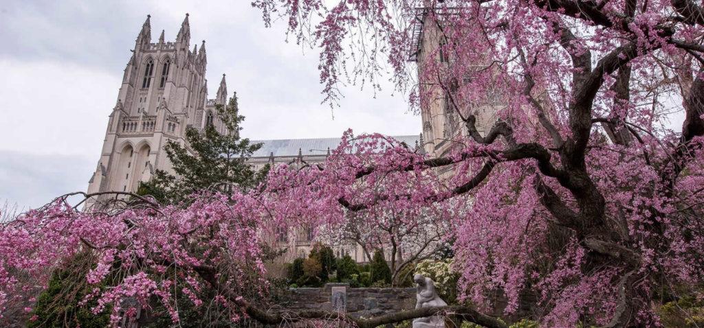 5-choses-visites-bons-plans-savoir-washington-dc-cathedral