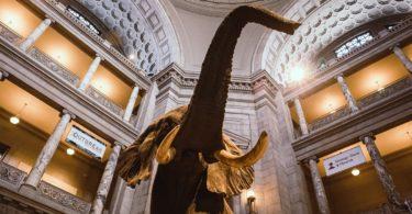 National Museum of Natural History à Washington D.C - Dinosaures, météores et un diamant de 45 carats au cœur de la capitale