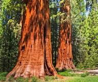 plus-beaux-parcs-nationaux-etats-unis-sequoia-192