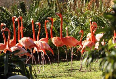 Jungle Island à Miami
