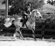 Wellington, le paradis des chevaux en Floride