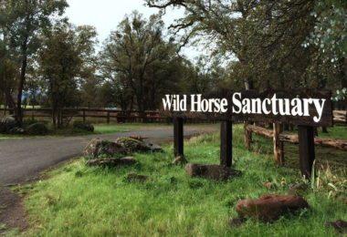 The Wild Horse Sanctuary