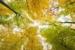 treetop-quest-accrobranche-atlanta-p-07