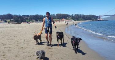 dog-sitters-san-francisco-une