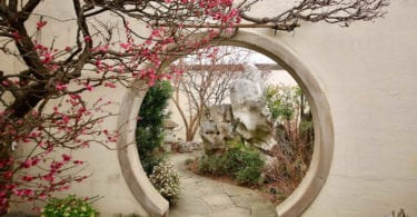 national-bonsai-penjing-museum-musee-bonzai-arbres-art-asiatique-une