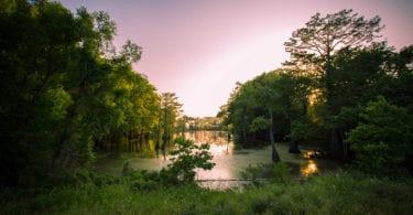 bayou-louisianne-mississippi-marecages-alligators-plantations-une