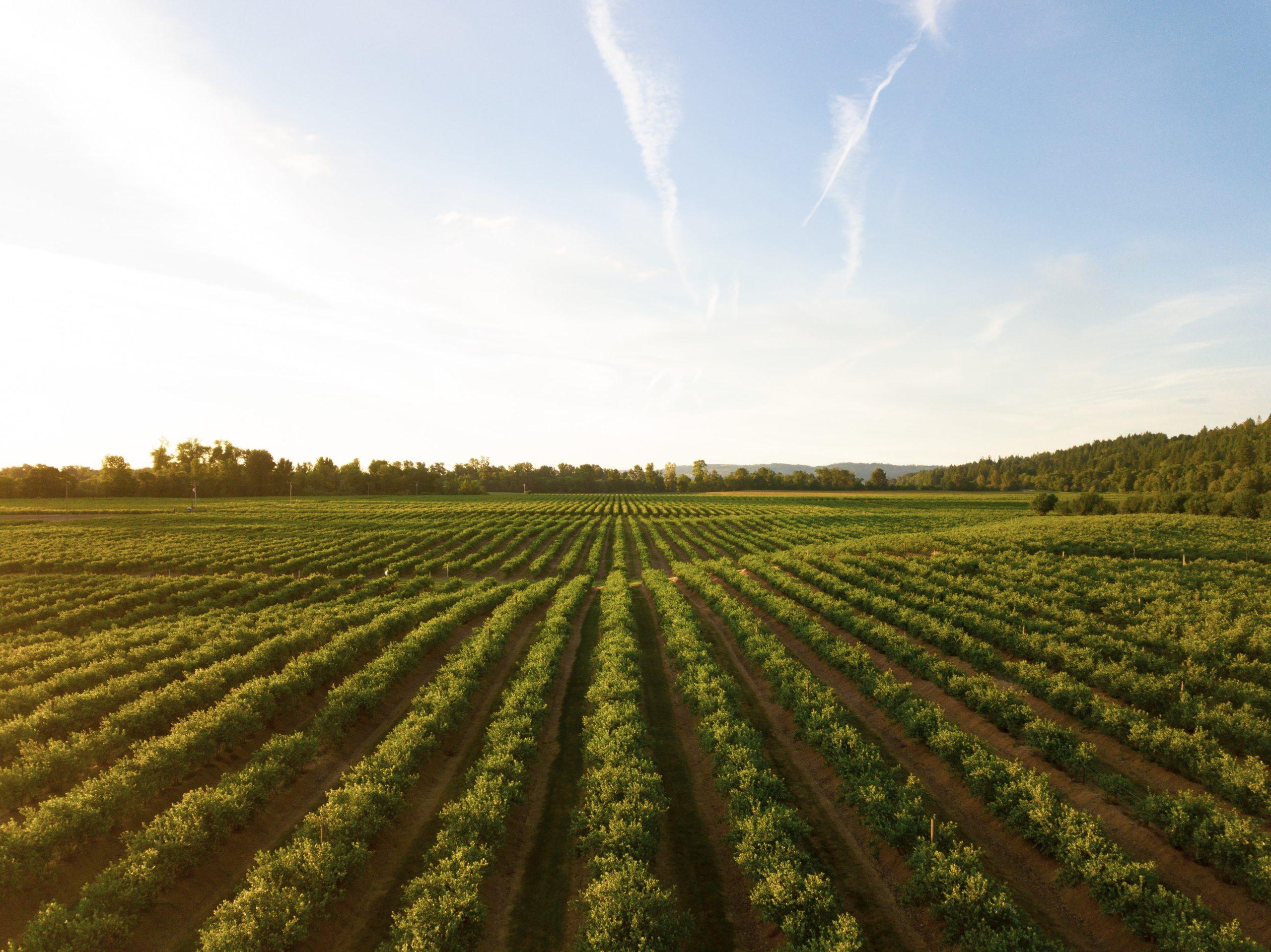 La route des vins de San Diego
