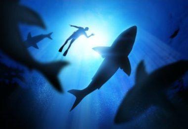 requins-predateur-danger-mer-ocean-une-b