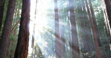 redwood-coast-entre-rivages-villages-sequoias-californie-nord-une