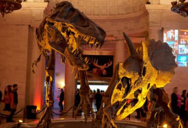 musee-histoire-naturelle-los-angeles-culture-sortie-weekend-visite-une