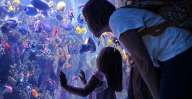 new-england-aquarium-boston-une