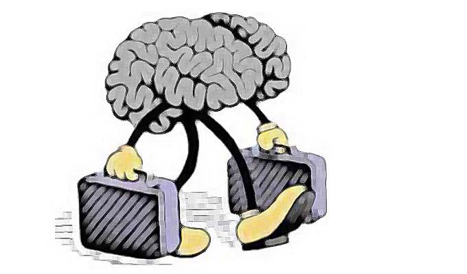 migration-cerveaux-article