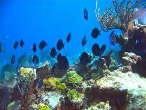 John-Pennekamp-Coral-Reef-State-Park-800x600