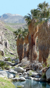 indian-canyons-palm-springs-randonnee