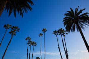 California high palm trees silohuette on blue sky USA