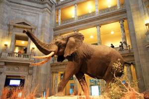 USA-National_Museum_of_Natural_History0